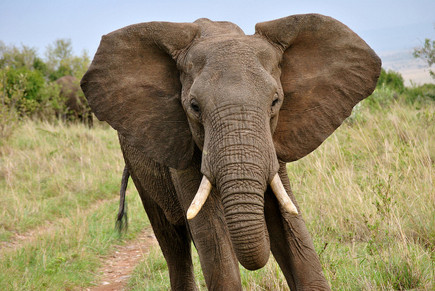 Bien-aimé 4 Things You Might Not Know About Elephants | KCET HQ85