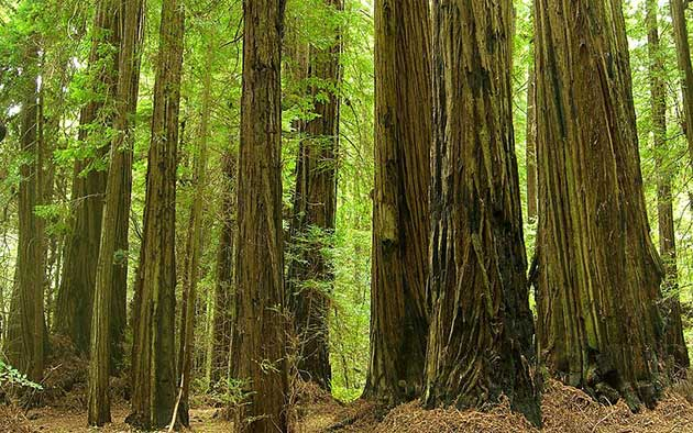 grizzly-creek-redwoods-12-20-15-thumb-630x394-100245