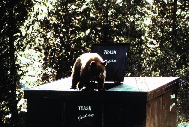 problem-bear2-12-13-15-thumb-630x424-100083