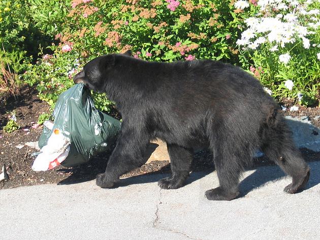 problem-bears-12-13-15-thumb-630x472-100081
