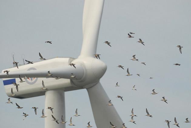 birds-wind-turbines-2-20-15-thumb-630x421-88423