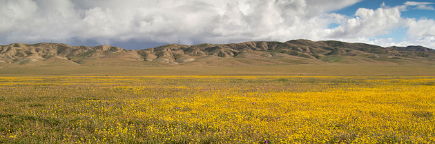 panoche-valley-goldfields-3-12-15-thumb-630x209-89369