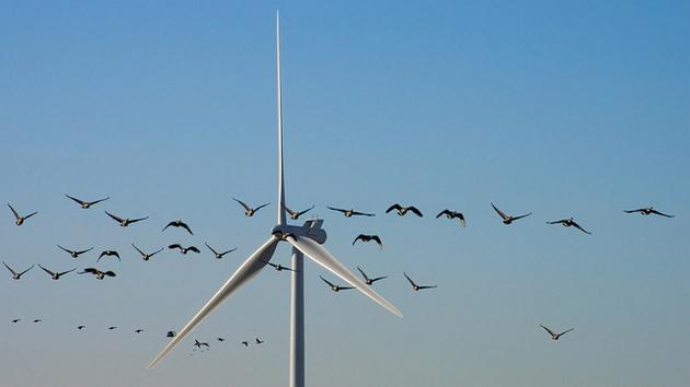 wind-birds-mortality-reporting-3-10-15-thumb-630x354-89281