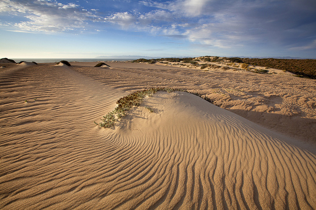 guadalupe-dunes-5-21-15-thumb-630x420-92901