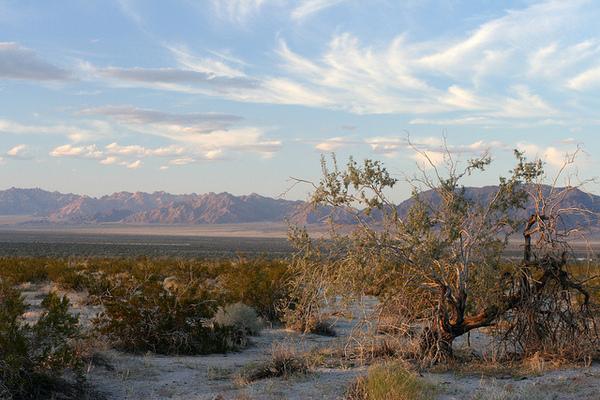 Desert-Centr-Ironwood-8-7-12-thumb-600x400-33800