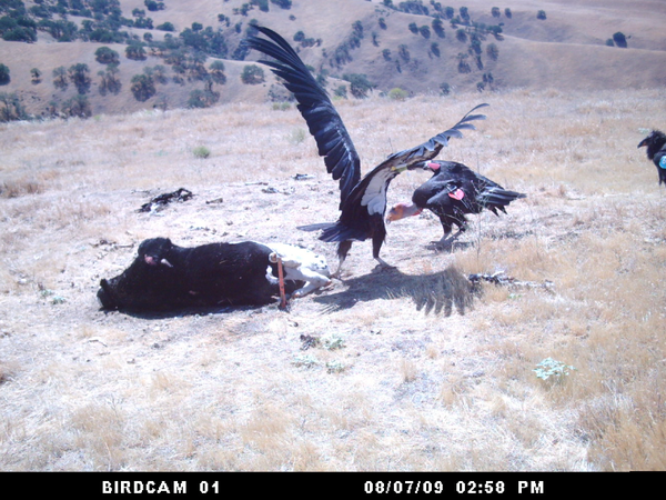 birdcam0-2013-05-13-thumb-600x450-50980