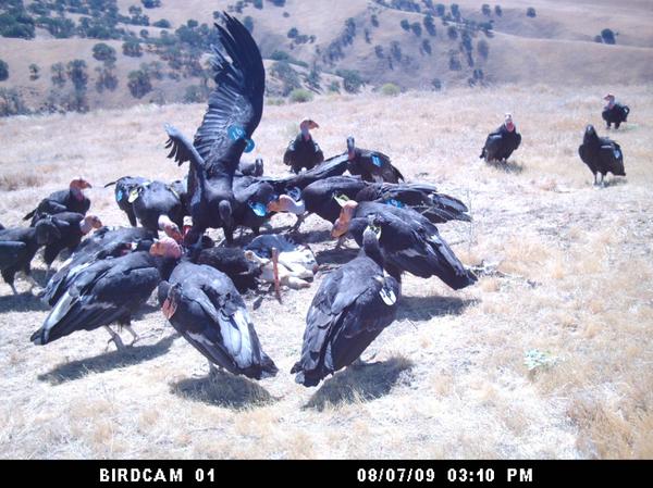 birdcam1-2013-05-13-thumb-600x449-50983