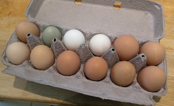 eggs-8-21-13-thumb-600x365-58300