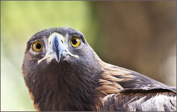 eagle-9-26-13-thumb-600x380-60661