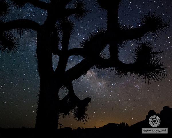 jtree-stars-11-21-13-thumb-600x480-64379