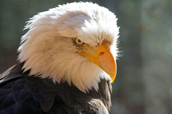 eagle-12-6-13-thumb-600x399-65290