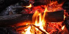 understanding-biomass