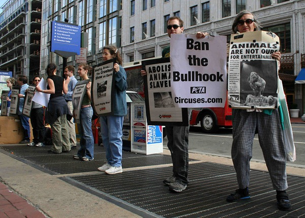 At a Ringling Bros. protest in Washington D.C.