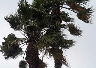 santa-ana-winds-warning1