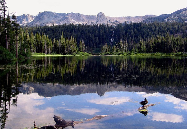 Mammoth Creek originates out of Twin Lakes in the Mammoth Lakes Basin.