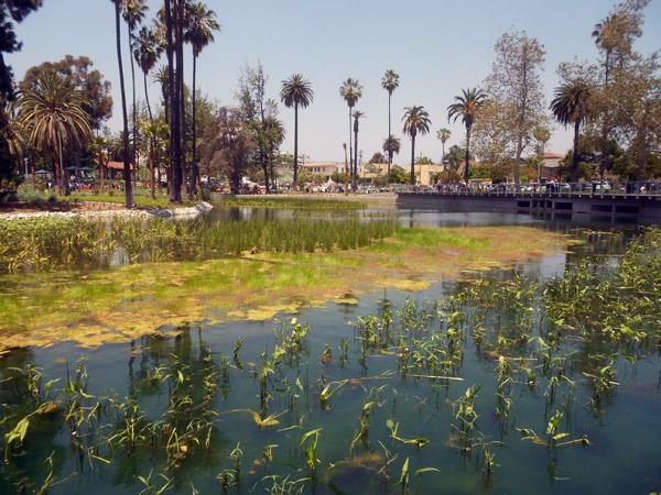 CC_Wetlands2