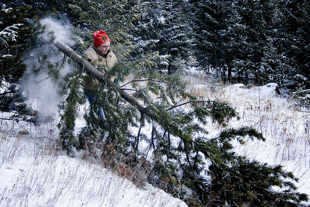environment-christmas-tree-cutting