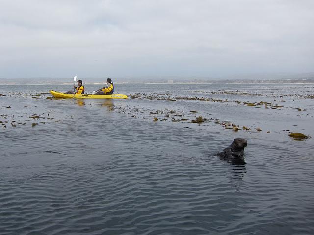 sea-otter-kayaking