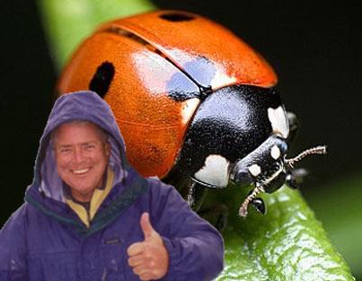 huell-ladybug.jpg