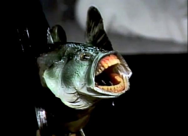 fish-with-teeth-thumb-600x436-63954