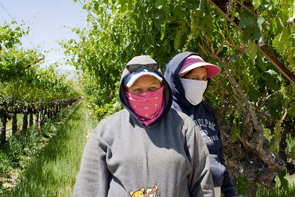 Two women harvesting fruit protect themselves from insecticides and dust by wearing kerchiefs over their faces. Photo by Alexandra Galvez