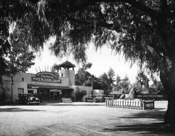Gay's Lion Farm, ca. 1920s | Photo: Security Pacific National Bank Collection, Los Angeles Public Library