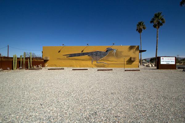Grococcyx californianus by Chuck Caplinger