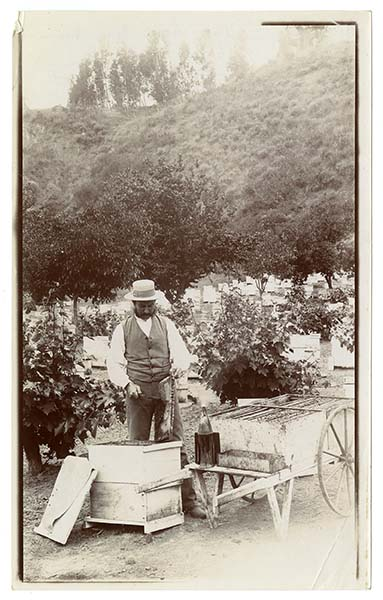J.P. McIntyre and his bees, circa 1880 | Courtesy California Historical Society