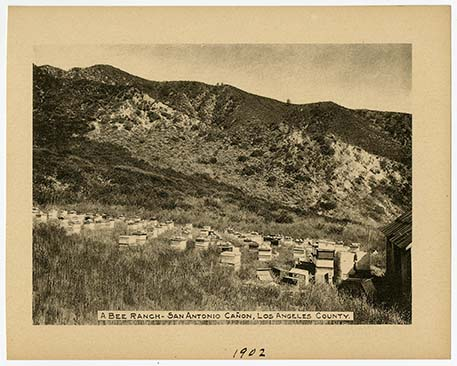 A Bee Ranch - San Antonio Canon, Los Angeles County, 1902 | Courtesy California Historical Society