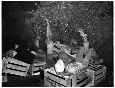 Grove Workers Waiting Out the Night, 1952