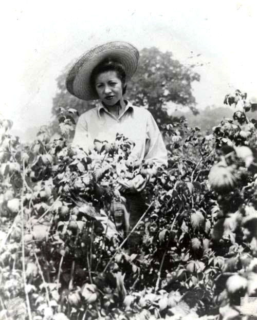 A woman picks berries, date unknown. | Courtesy of La Historia Society of El Monte