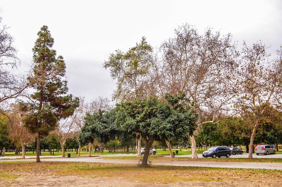 semaptrees02