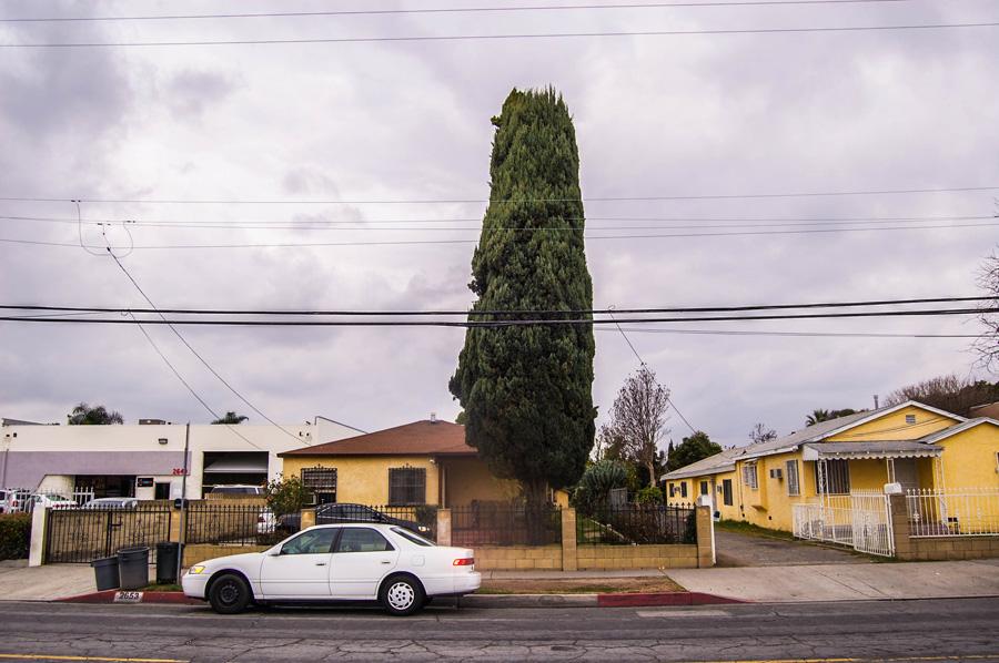 semaptrees04