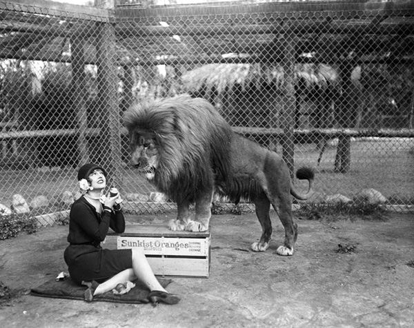 Young woman sits on the ground eating an orange, as a large lion watches her at Gay's Lion Farm. | Courtesy of Los Angeles Public Library