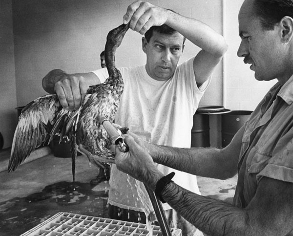 Douglas Campbell says: 'With respect to nature, we broke it and now we own it.' An oil-soaked duck, in 1988, from the Sepulveda dam basin area. Photo by Mike Mullen from the Herald-Examiner Collection. Photo courtesy Los Angeles Public Library.