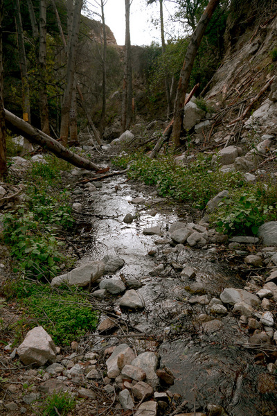 The natural beauty of the Arroyo Seco remains in the upper sections of the stream. Photo by Yosuke Kitazawa | KCET