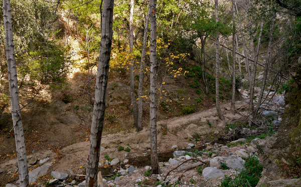 The Hahamog'nas walked along the Arroyo Seco through the canyon to reach the other side of the mountains. Photo by Yosuke Kitazawa | KCET