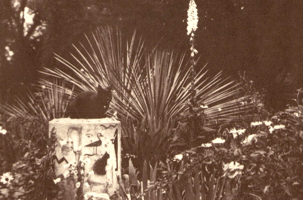 Olive's Garden with her cat. Photo taken from the The Children's Garden Book (Huntington Library, 2005)