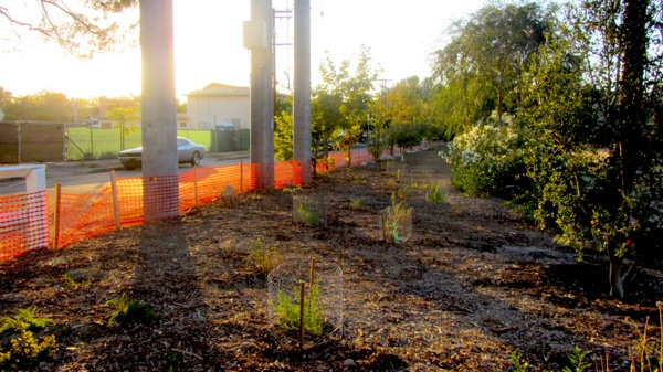 Tree planting at Moorpark Point at Fulton and Valleyheart. | Photo: Zach Behrens
