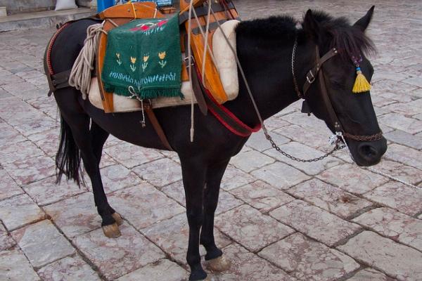 donkey1-600