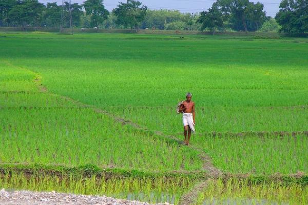 ricefarmer-600
