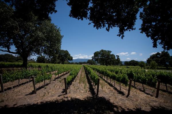 wine-vineyard-Santa-Barbara-090312