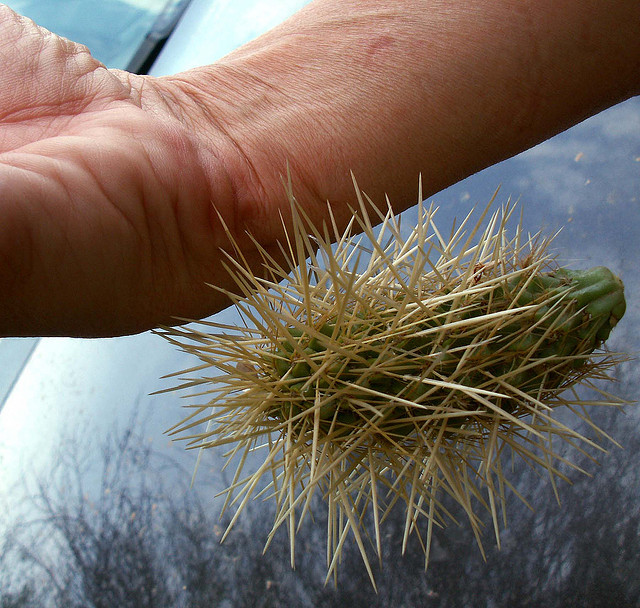 How To Remove Cactus Spines From Your Perforated Body | KCET