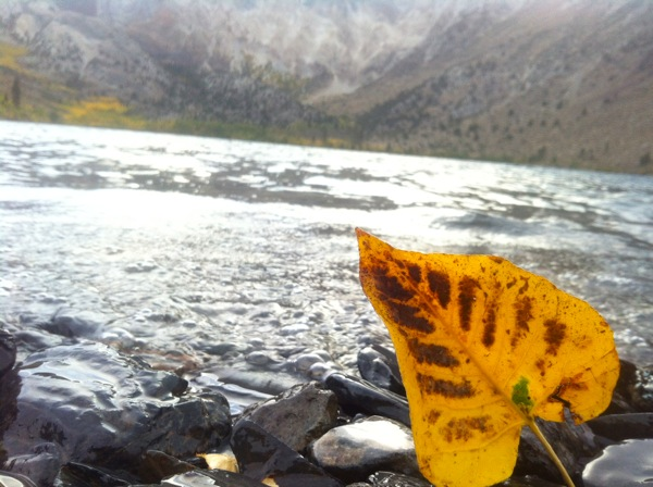 A leaf ashore at Convict Lake. | Photo: Zach Behrens/KCET