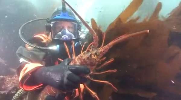 A ranger at Anacapa Islands teaches students on the mainland about kelp forest sea life during a Channel Islands Live session. | Image: Screenshot from National Park Service video