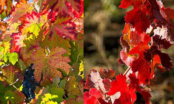 Photos taken in Napa Valley | Photos by John Poimiroo