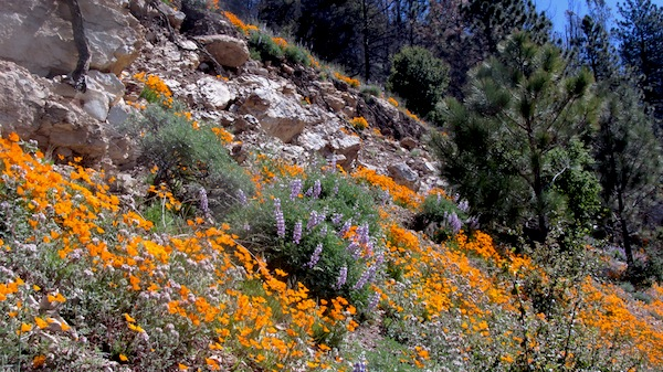 Figueroa Mountain Road near Catway Road | Photo: Zach Behrens/KCET