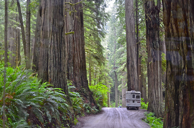 redwood-national-park-road-maintenance