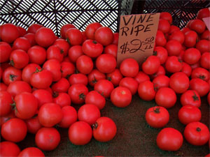 tomatoes: hated as kid, relished as an adult