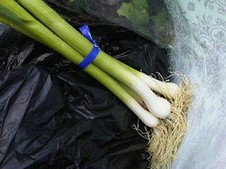 green garlic, a market delicacy
